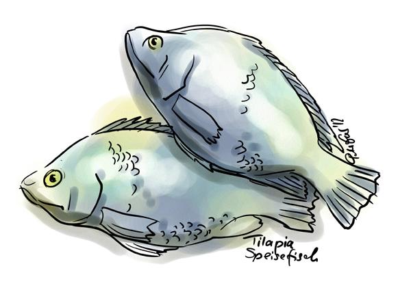 Peter Esser: Tilapia-Fische
